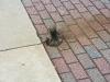 Squirrel Down